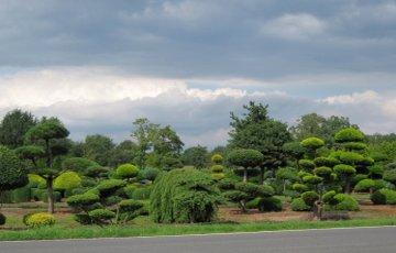 Японский садовый стиль