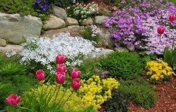 Декоративные садовые травы